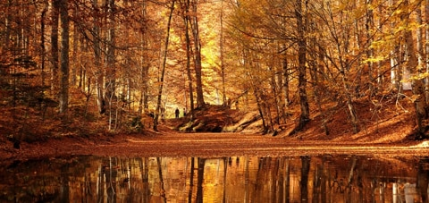 An autumn forest scene illustrates capability of VENICE's 6K sensor.