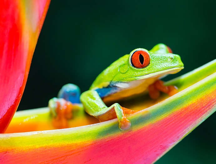 Colourful frog
