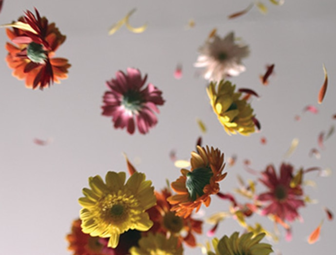 Flowers and petals in the wind