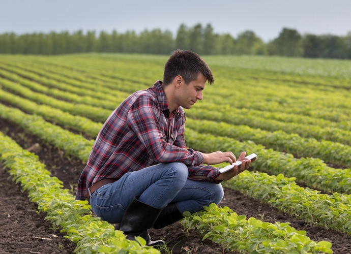 Agronomist using a tablet in a field with long rows of short green plants