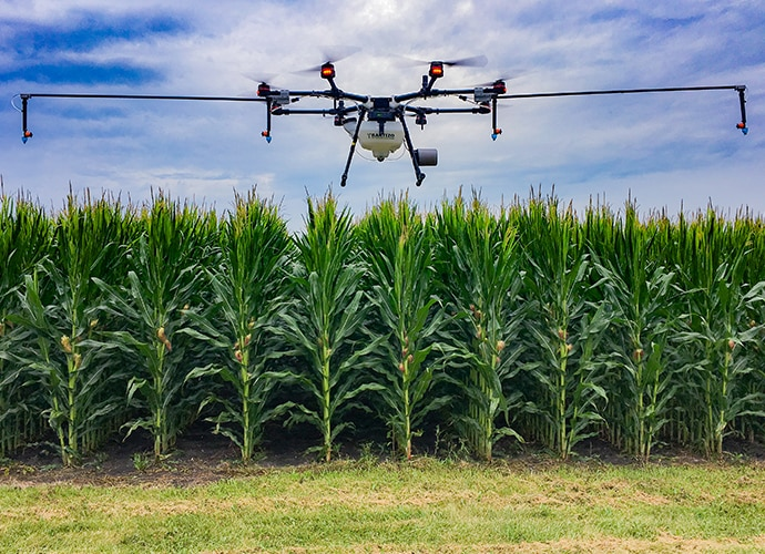 Drone hovering low to the ground in front of a corn field
