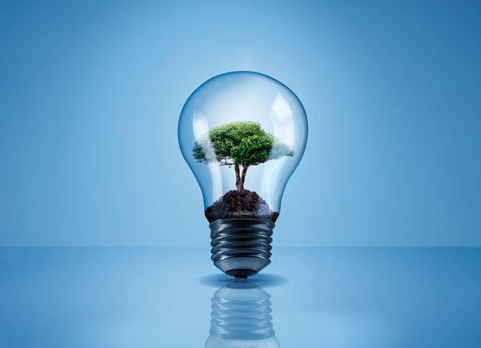 light bulb with a tree inside it